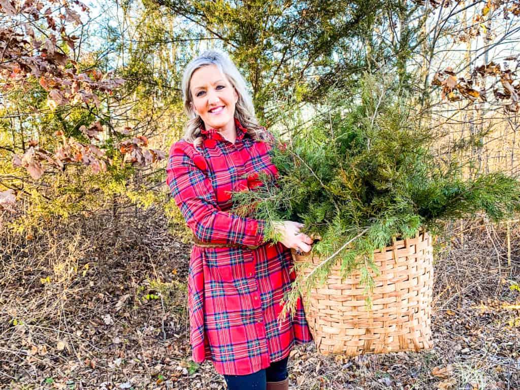 fresh cedar boughs