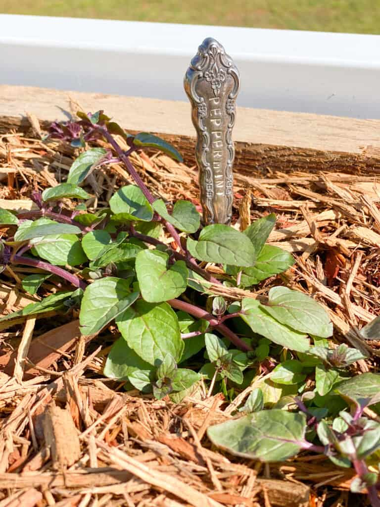 Peppermint plant with a stamped antique knife marker by fearlessdiy